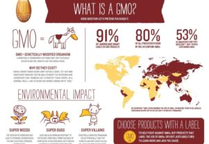 What is GMO infographic